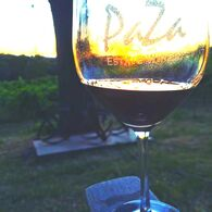 Wine Glass at the vineyard